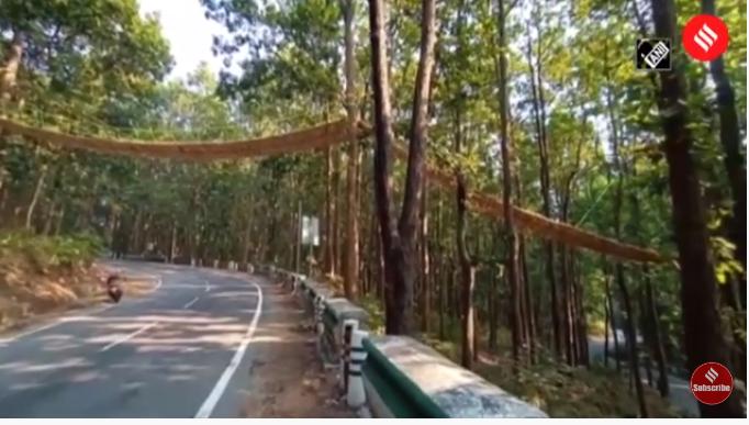 ინდოეთში ქვეწარმავლებს ხიდი აუშენეს (ვიდეო)